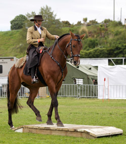 Lusitano Horse - Working Equitation